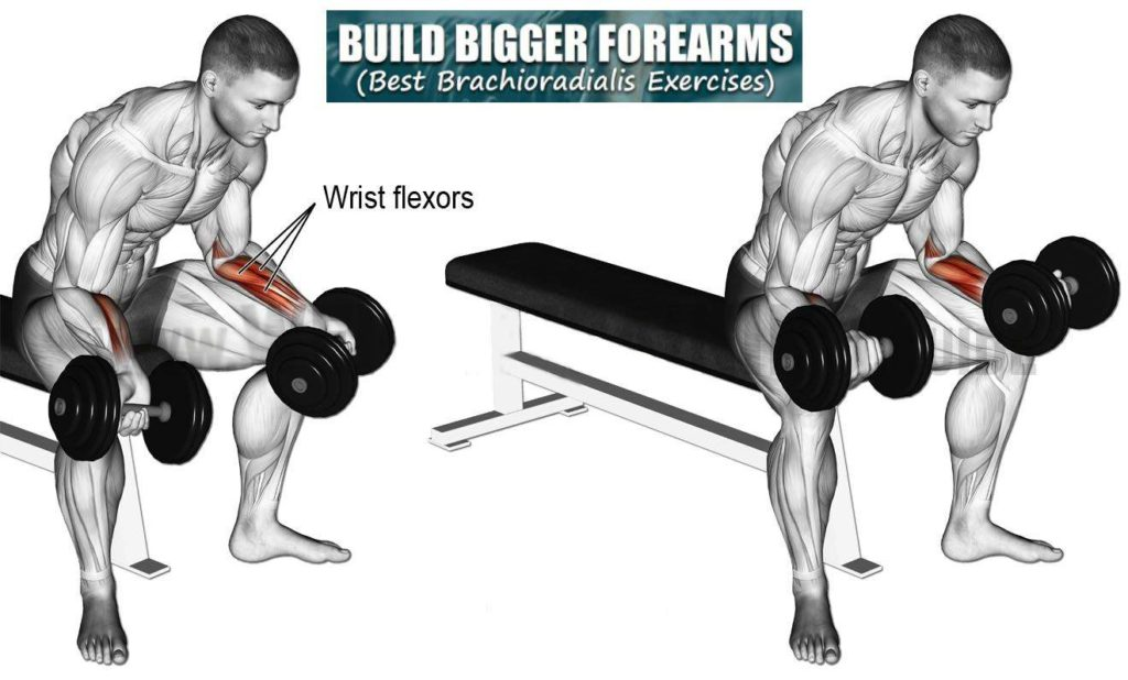 Dumbbell Wrist Flexion Easy Exercises For Forearm