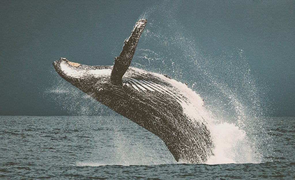 Whale Watching UK
