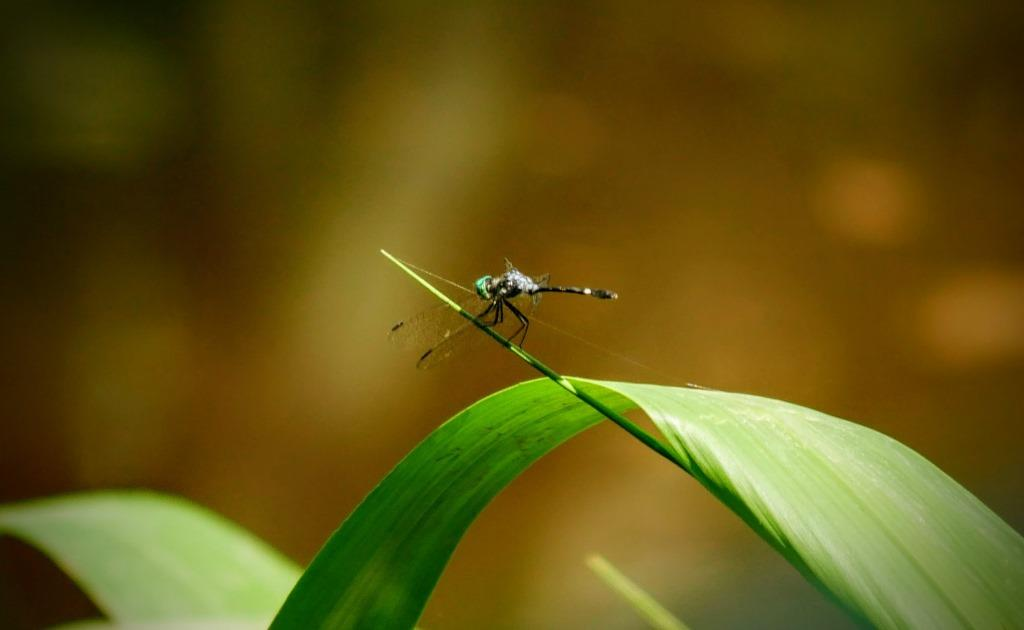 Insects of the Amazon Rainforest