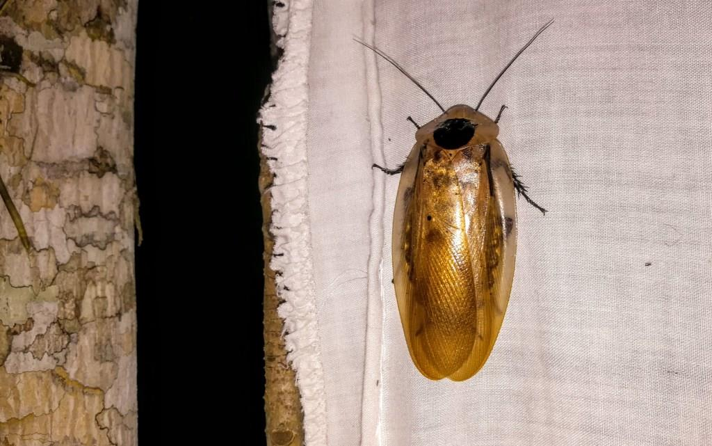 The Insects of the Amazon
