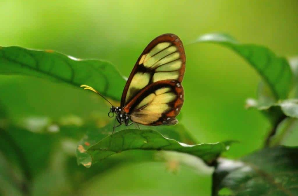The Insects of the Amazon Rainforest