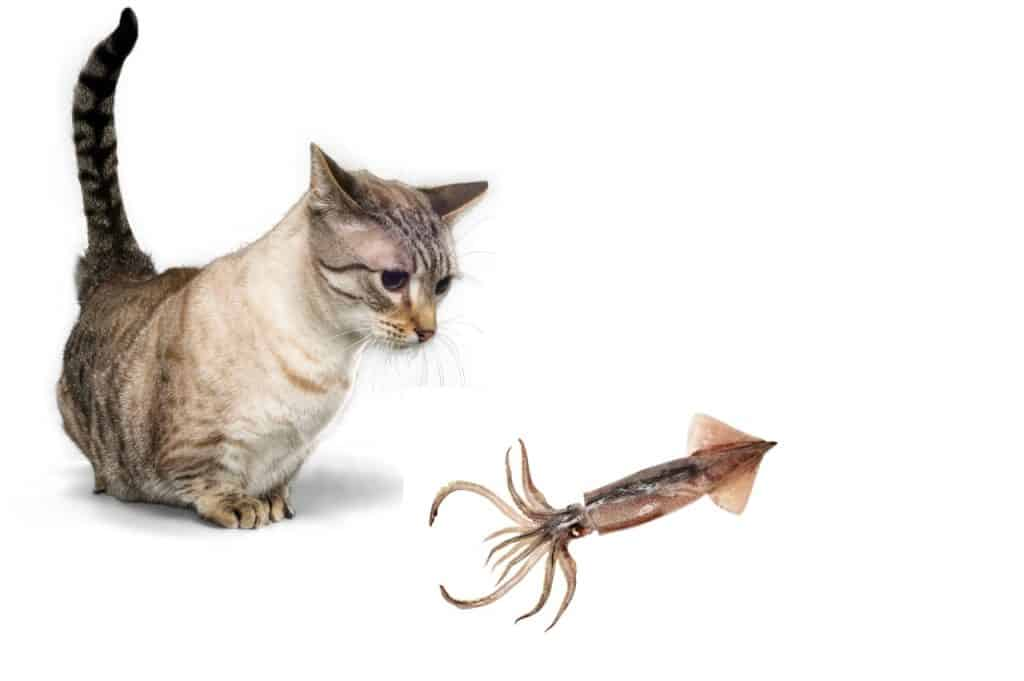 Can Cats Eat Raw Squid