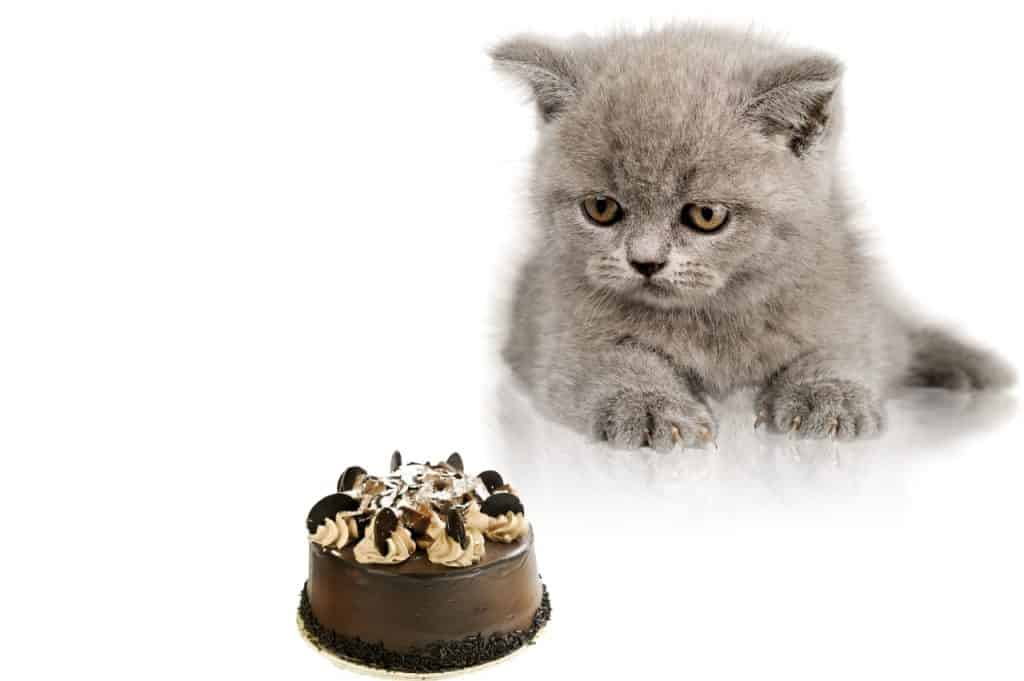 Can Cats Eat Cakes