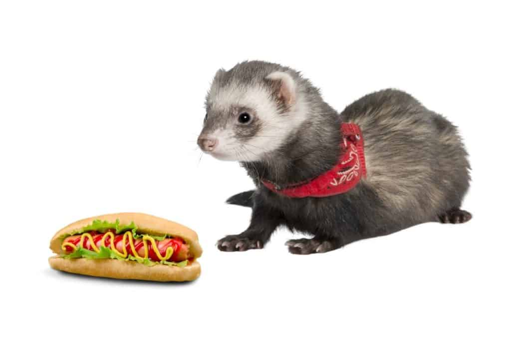 Can Ferrets Eat Hot Dogs