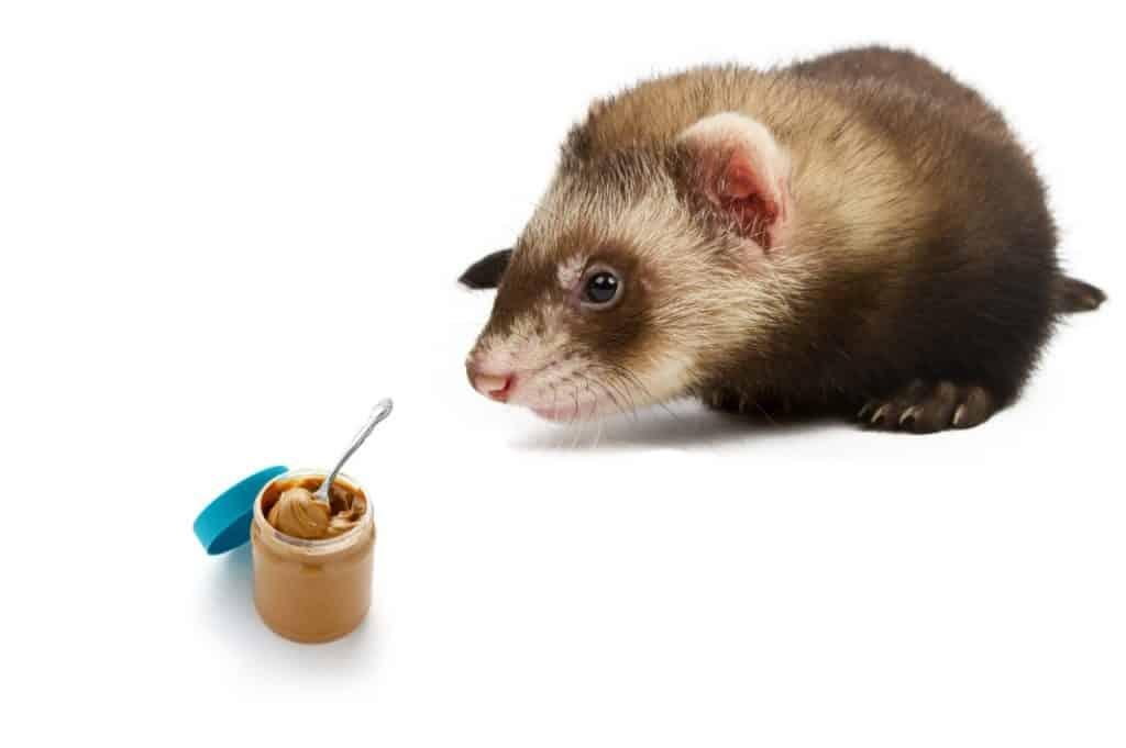 Can Ferrets Eat Peanut Butter