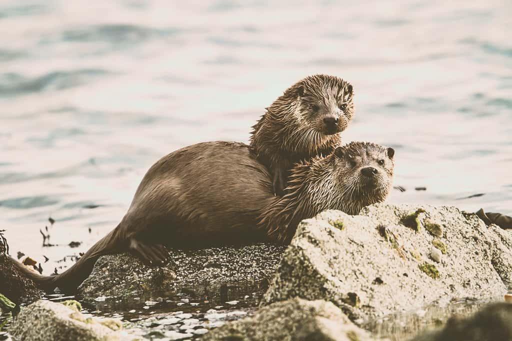 The Shetland Isles, Scotland