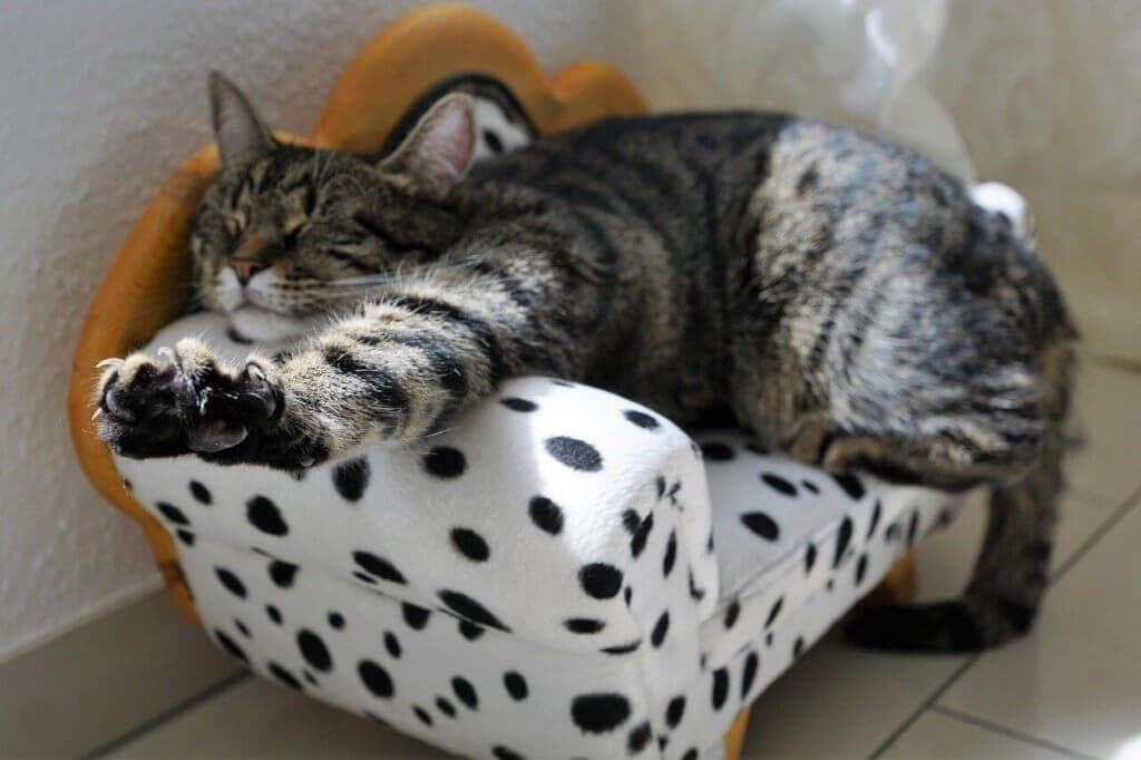 croquette premium pour les chat stérilisés