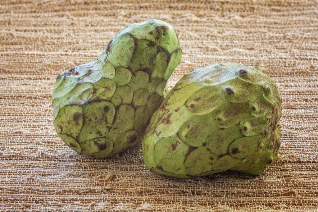 close up of the reptile-like skin (scales) of 2 cherimoyas
