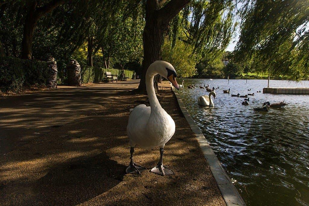 Wimbledon Park London