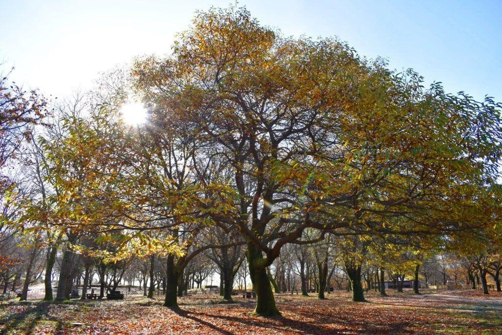 El sol entrando en el bosque en otoño aprovechando la caída de la hoja