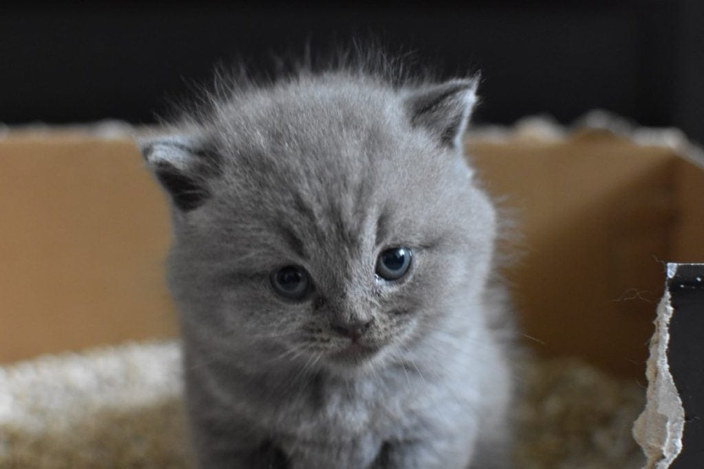 kitten pooping on non-clumping litter