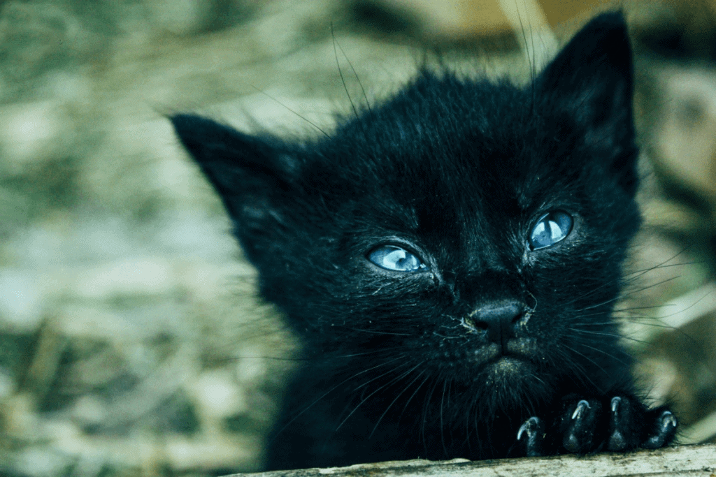 Image of a young and weak kitten, possibly suffering from anemia