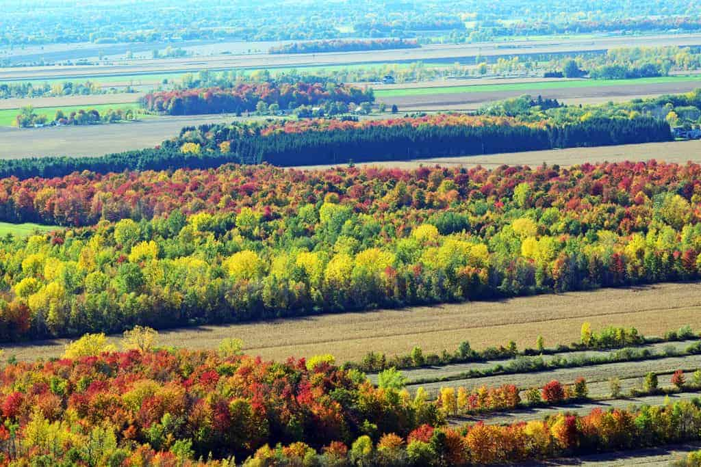 Fields of Fall colors