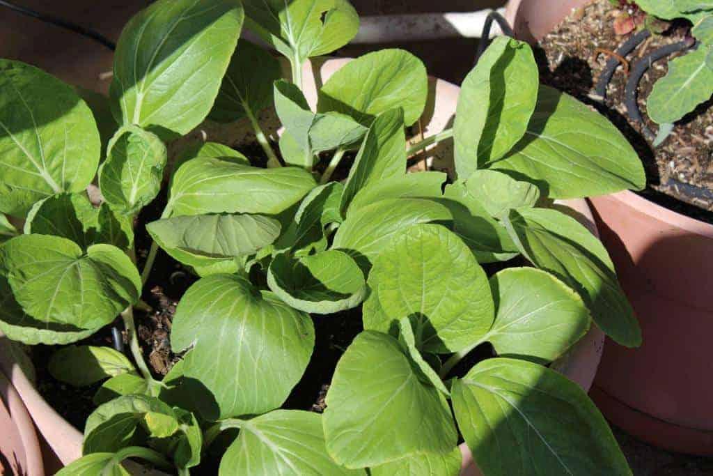 plant seedlings - Stone Family Farmstead