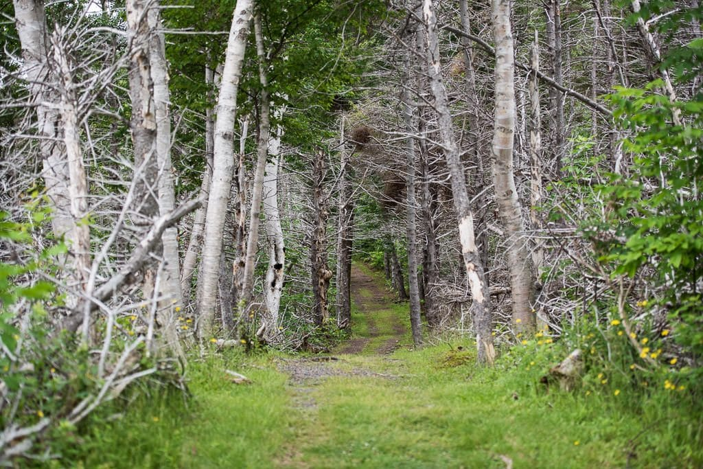 Wooded trail from Cheticamp Campground to Le Chemin du Buttereau & Le Buttereau trails