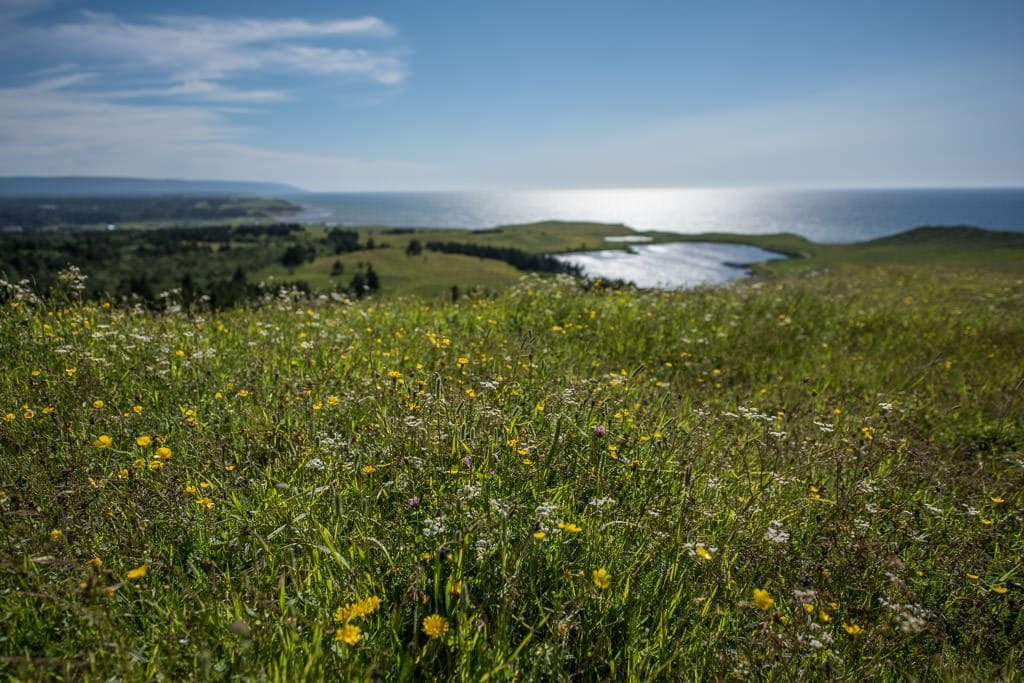 Wildflowers growing on the hill with a heart shaped lake in the background.