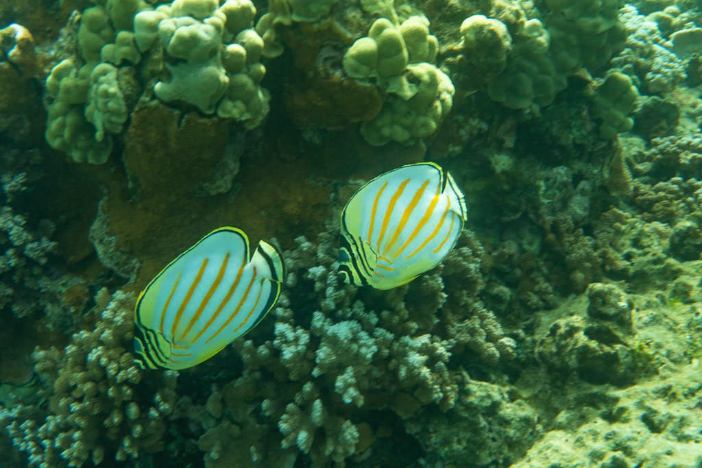 reef fish in molokai