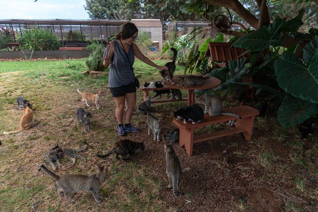 petting about 15 cats at the lanai cat sanctuary