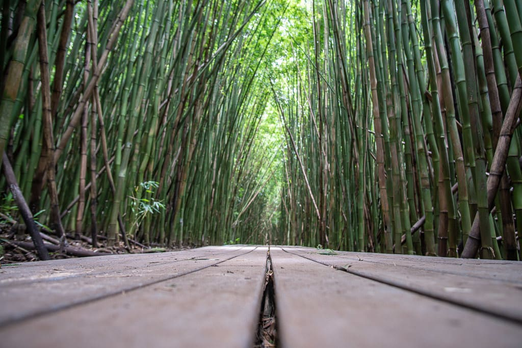 walking boardwalk in the Maui Bamboo forest on the Pipiwai Trail