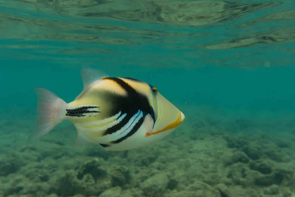 colorful reef fish snorkeling at Hanauma Bay Nature Preserve