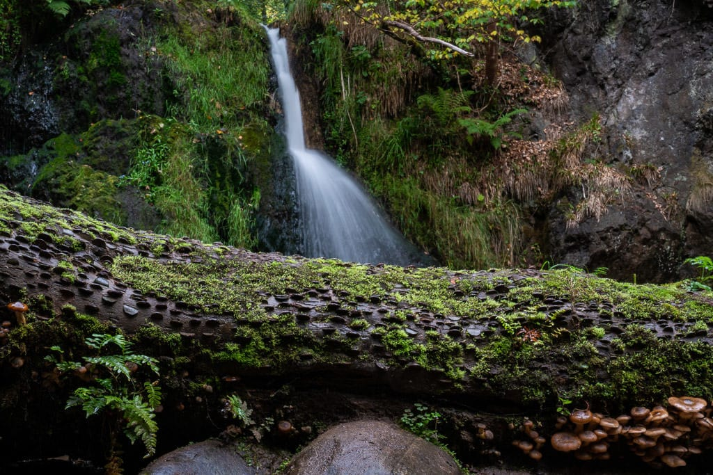 The second waterfall at Fairy Glen Falls with a fallen log in front of it with lots of coins shoved inside the log