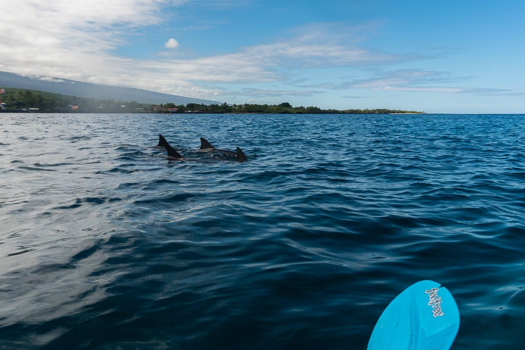 big island kayaking with wild dolphins and snorkeling kona