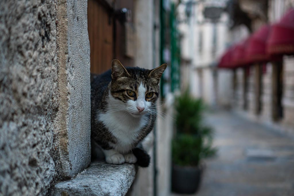 Cat sitting in window sill looking down the street.