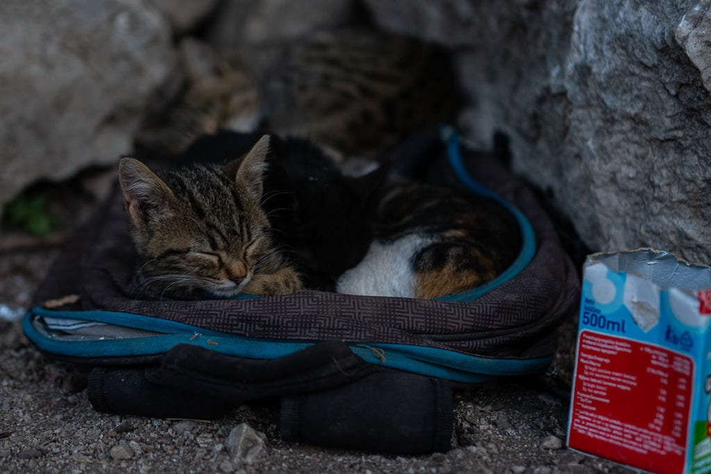 A few kittens and their mother sleeping in a backpack on the Kotor City Walls.