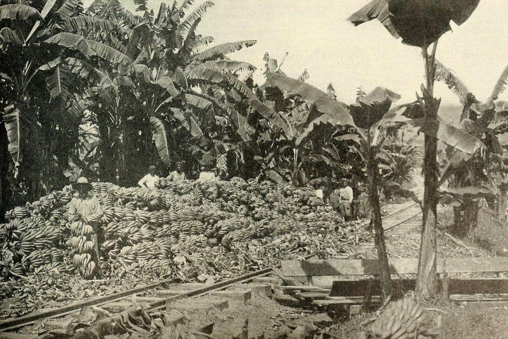 Ferrocarril y bananeras