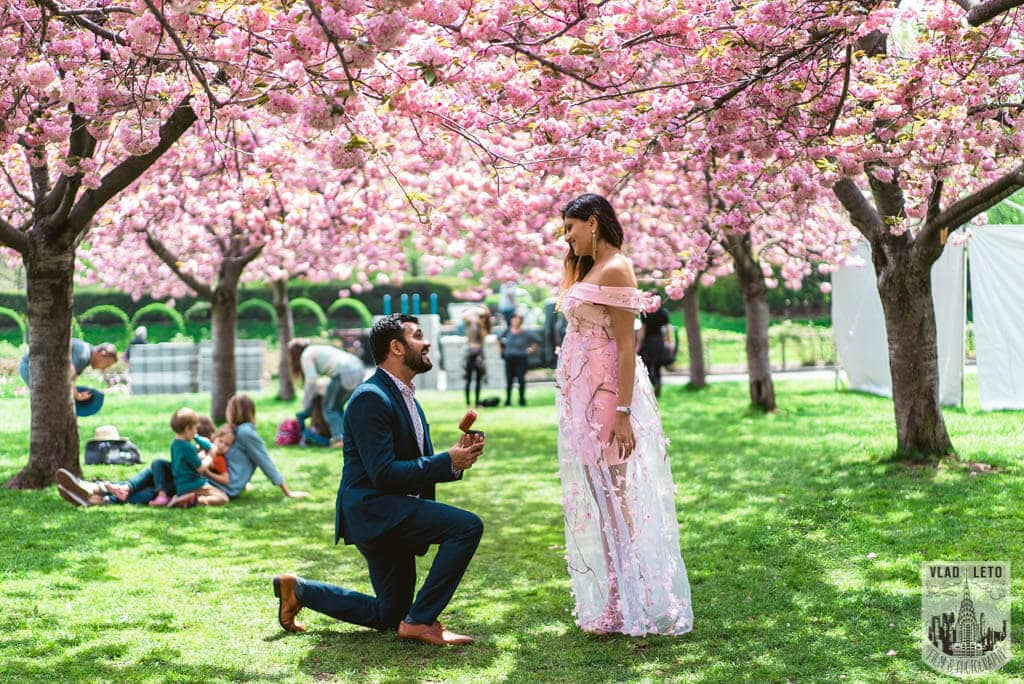 Photo Cherry Blossom Marriage Proposal in Brooklyn Botanical Garden | VladLeto