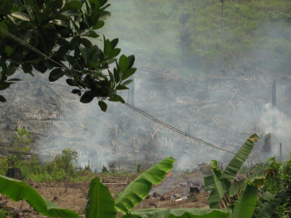 Orangutan Habitat Loss in Indonesia