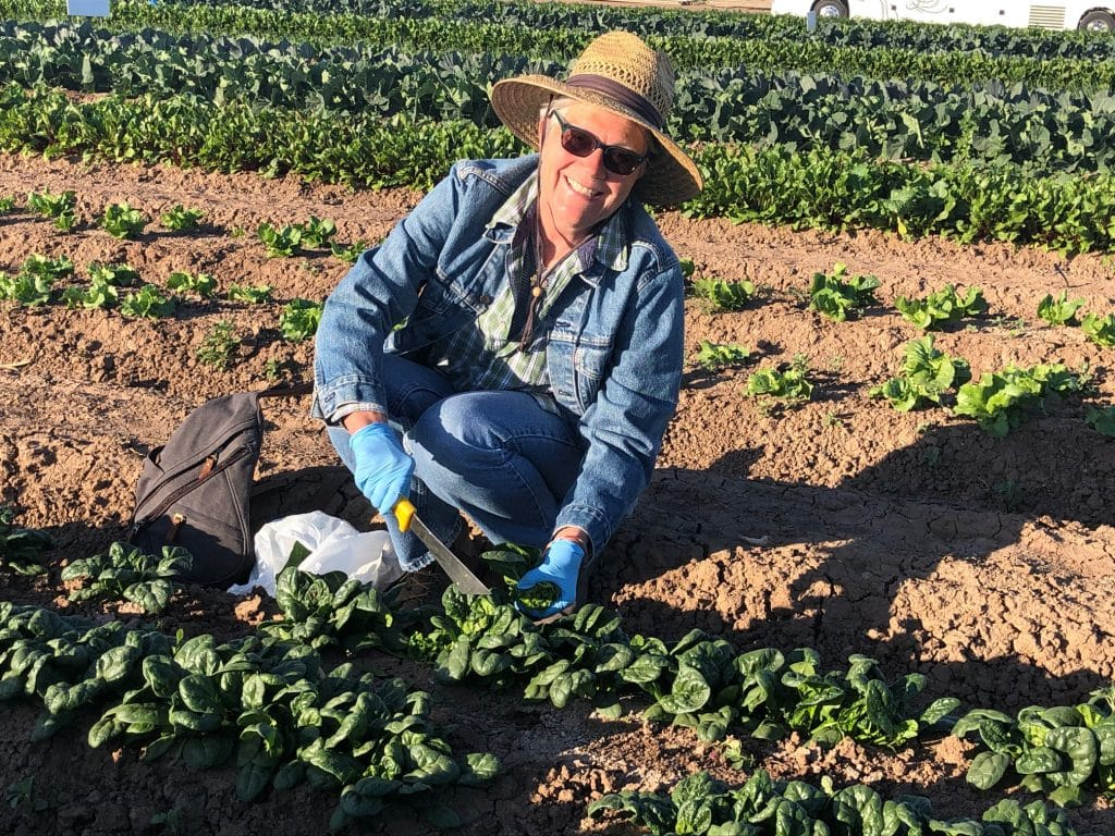 Travel blogger UNSTOPPABLE Stacey squats in field to pick spinach. Dressed in denium jacket, jeans and a straw hat, she holds a lettuce knife during Field to Feast Yuma tour.