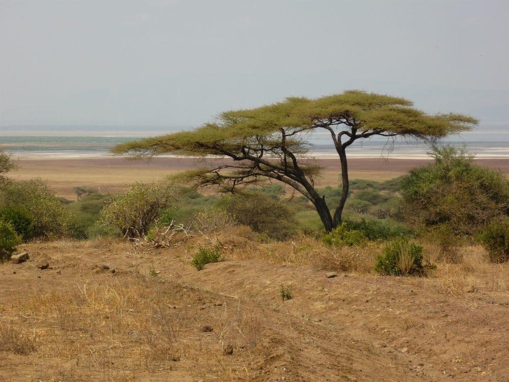 Acacia tree with Lake Manyara far off in the distance below