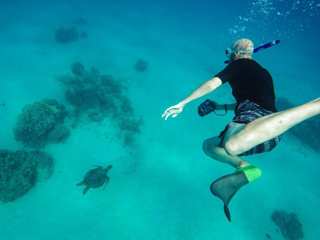 buddy photographing a Hawaiian Green Sea Turtle during snorkeling tour in molokai