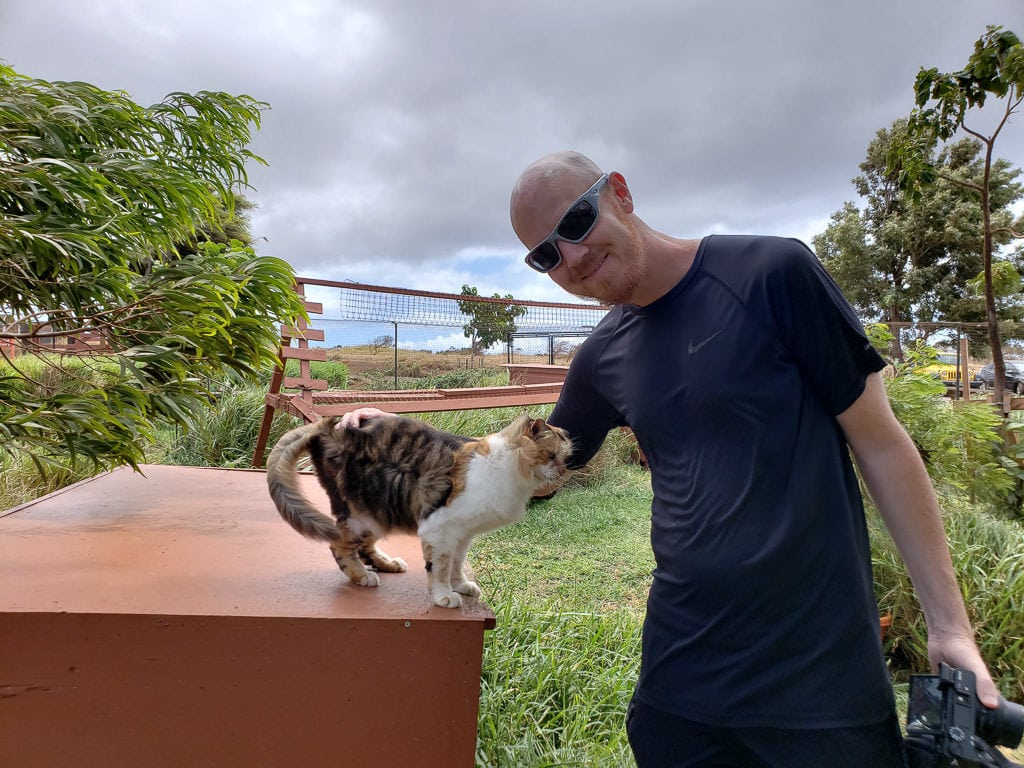 petting a cat at the lanai cat sanctuary on a day trip to lanai