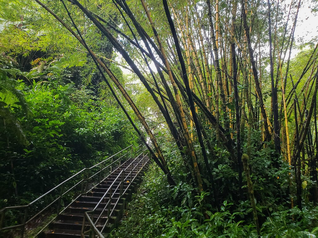 trail to akaka falls in hilo on big island hawaii