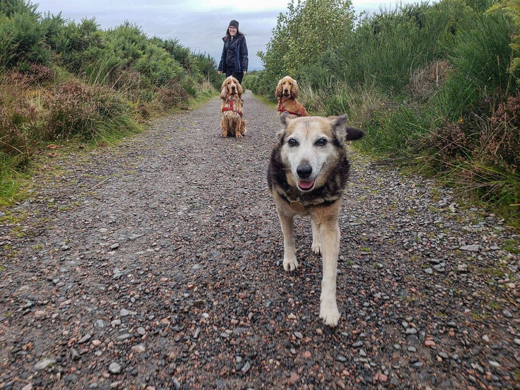 walking three dogs we pet sat for through trusted housesitters in scotland