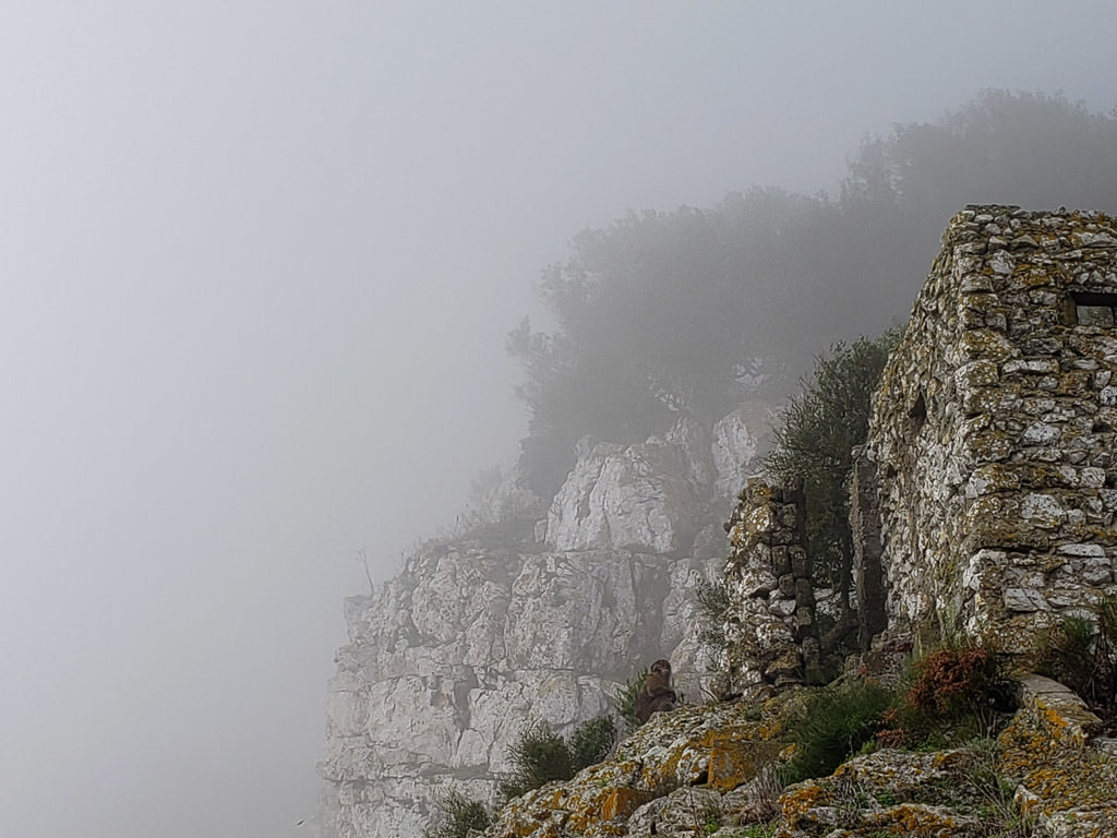 foggy cliffside views on the rock of gibraltar