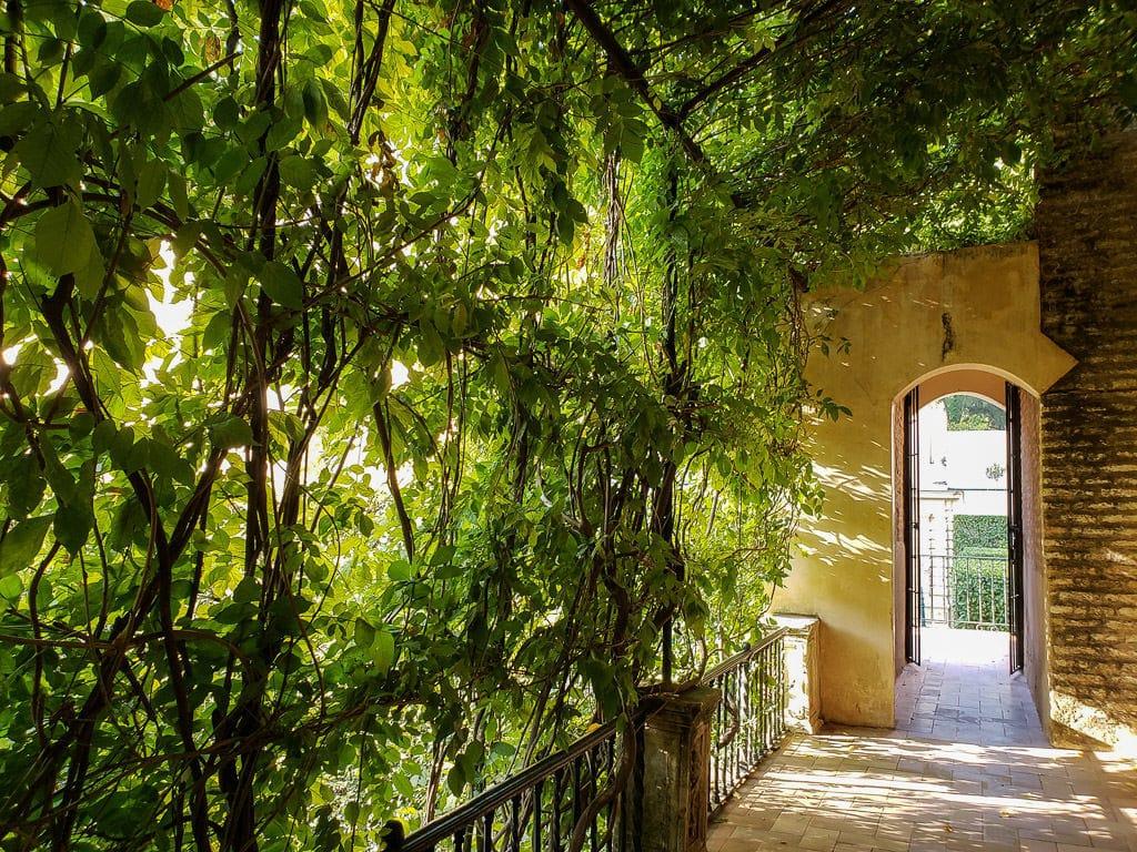 vine covered tunnel in the real alcazar in sevilla spain