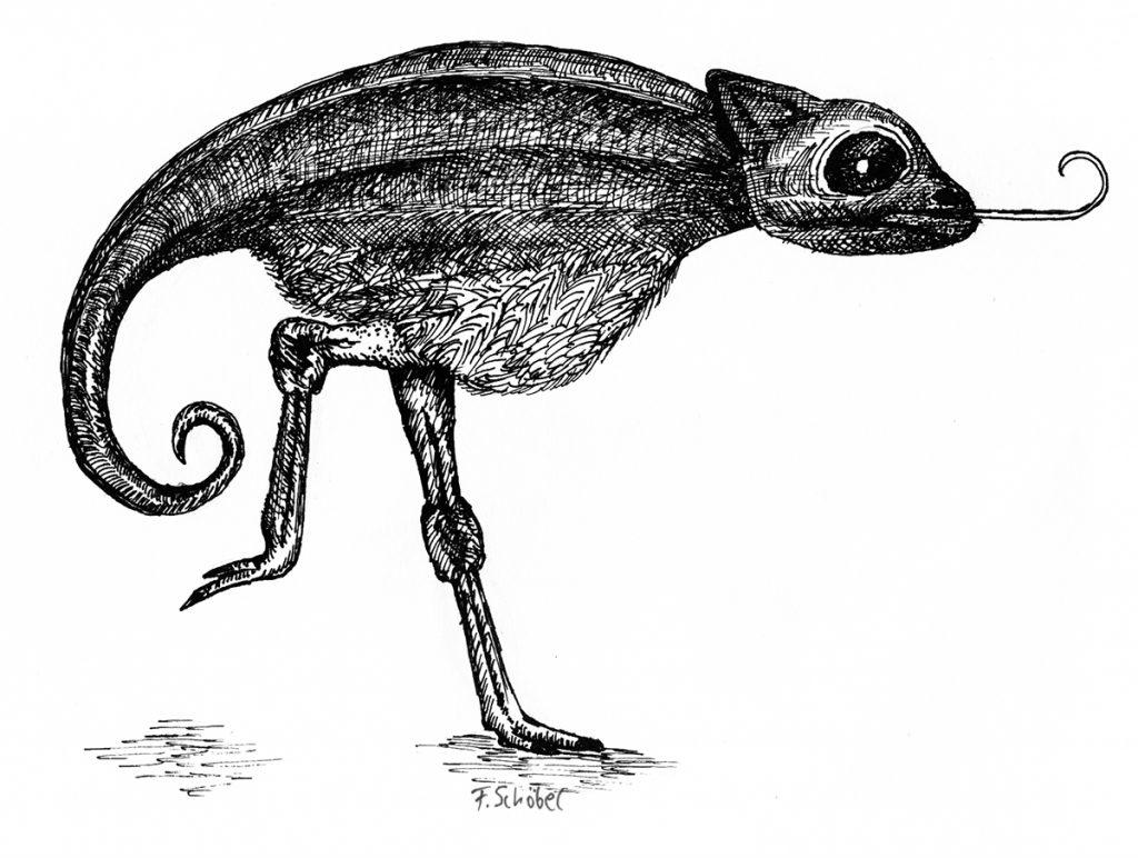 Illustration Straußäleon