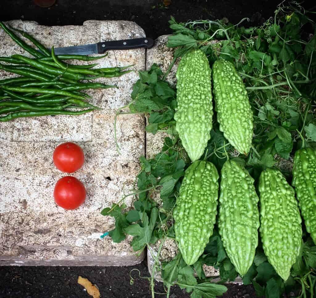 Okinawa vegetable