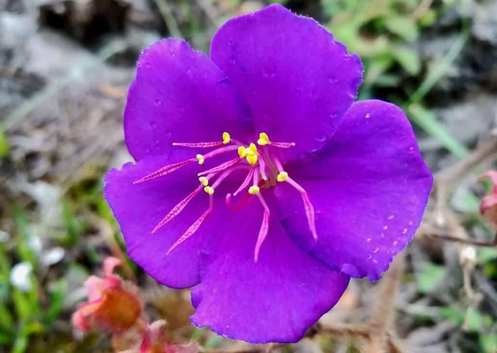 Ecuador Wildflowers Road Trips