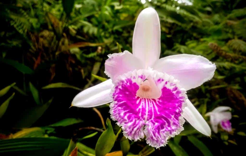 Ecuador Wildflowers and Orchid Private Tours