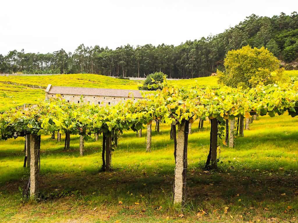 Wine tasting in Galicia