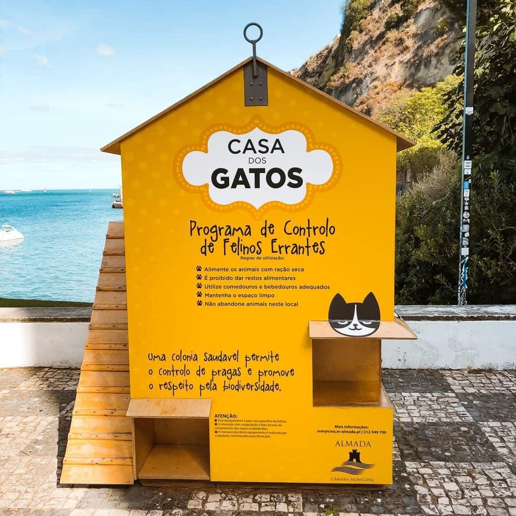 Casa dos Gatos ein portugiesisches Katzenhaus
