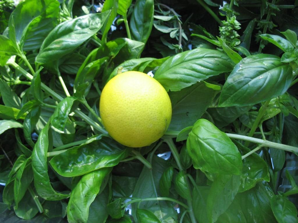 How-To: Freezing Fresh Herbs