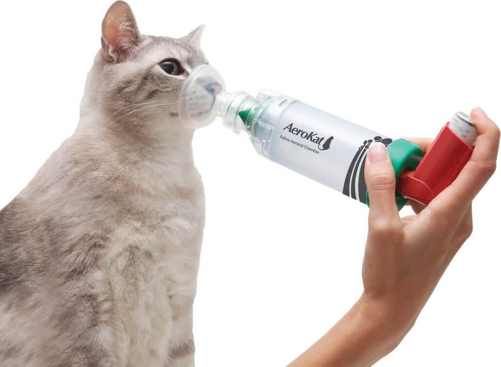inhalateur pour chat aerokat