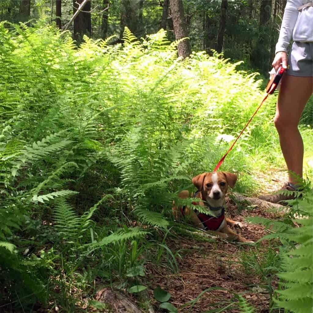 Hazel in the ferns