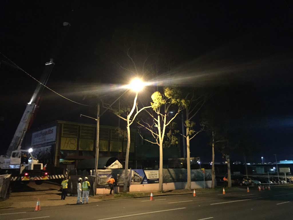 Homebush Night Tree Removal