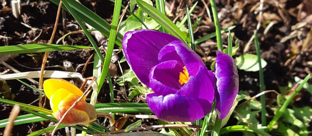 Kevad 1024x448 - С началом весны и крепкого здоровья!